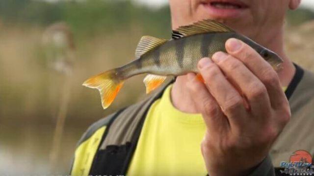 Ловля на спиннинг. Отводной поводок. Рыбалка с отводным.